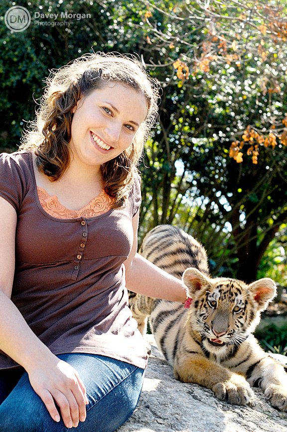 Pictures of tiger in zoo, picture of tiger in zoo | Davey Morgan Photography