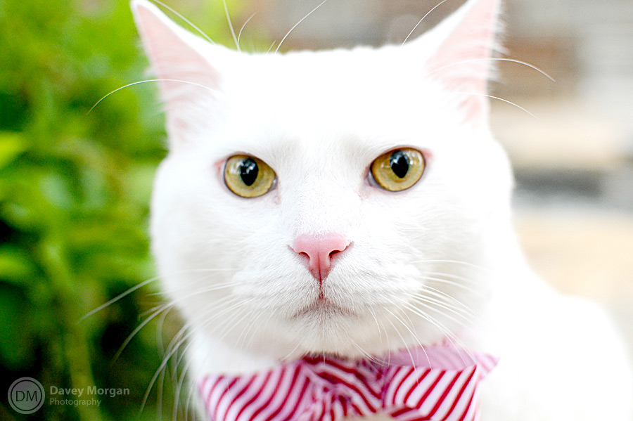 Cat Pictures in Greenville, SC | Davey Morgan Photography