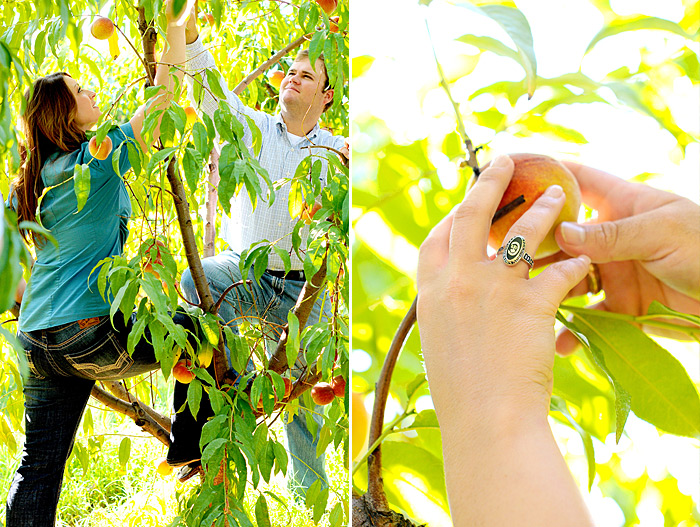 picking peaches from a peach tree | Davey Morgan Photography