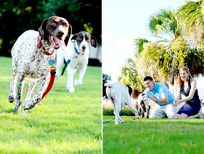 Charleston, SC Pet Photographer | Davey Morgan Photography